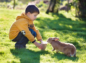 Rabbit Information, Food, What to feed a rabbit