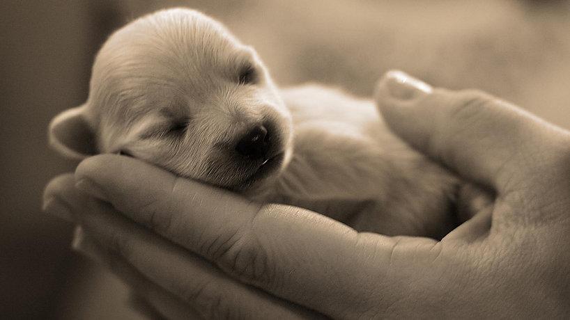 puppy hand.jpg