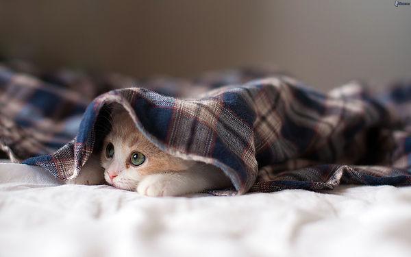 kitten blanket.jpg