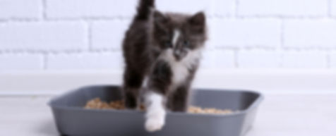 Kitten Litterbox.jpg