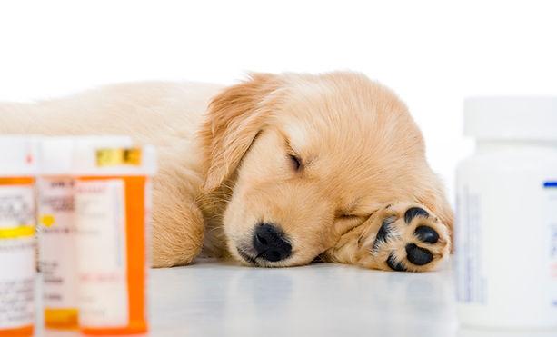Dog medication.jpg