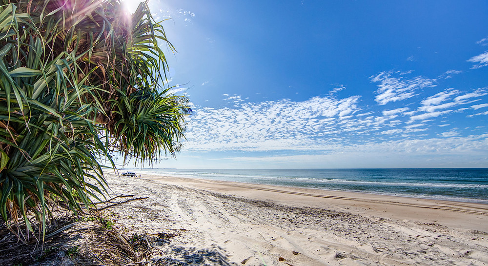 Bribie Island Beach and Pandanus Tree