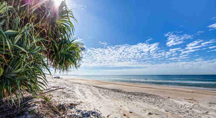 Bribie Island Beach and Pandanus Tree