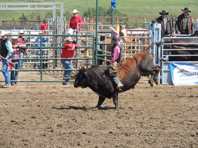 Saturday bull pink shirt_edited.jpg