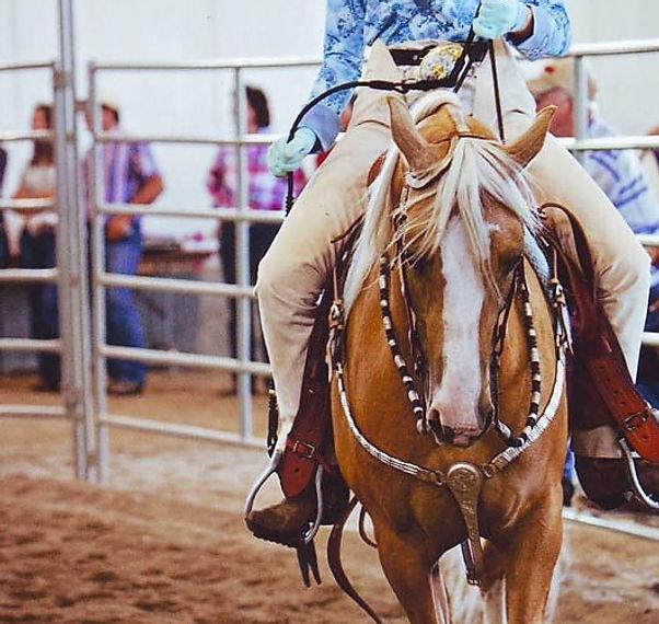 horse show 5.jpg