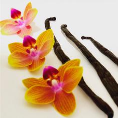 Tahitian vanilla. Cherry kombucha. Magic ✨