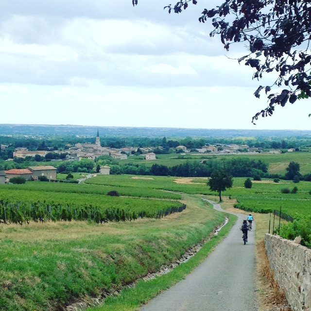 We spent Sunday amongst the vineyards of Beaujolais this weekend and it was beautiful. The roads for cycling are anything but boring!