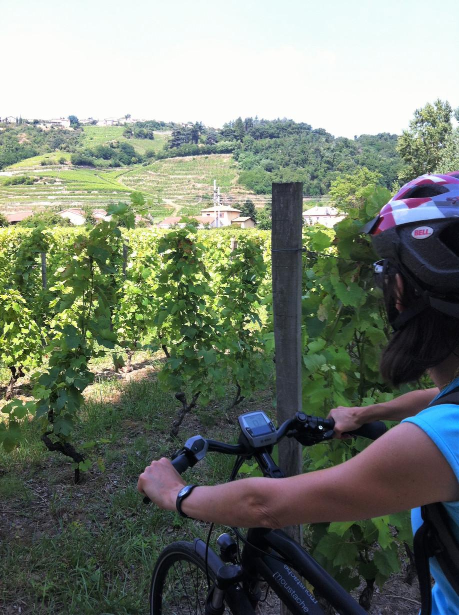 Vines galore