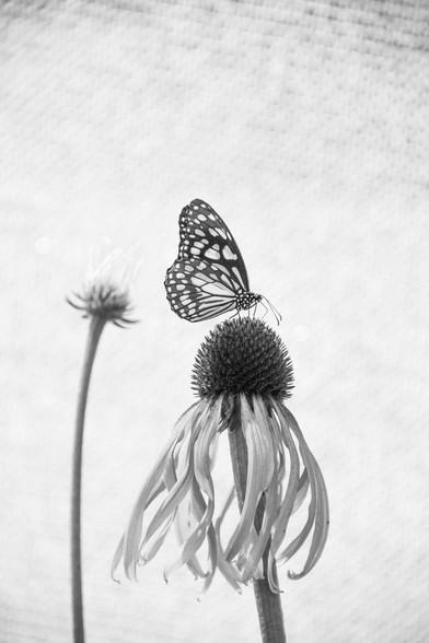 La Fleur Fatale_Resized.jpg