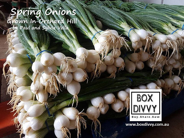 Spring Onions grown in Orchard Hills Pau