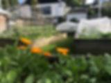 IMG_9919 Community Garden.JPG
