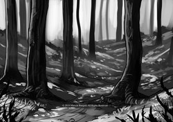 DARSH FOREST