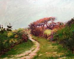 Nantucket Scrub Path
