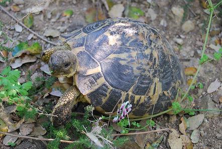 centro de tortugas