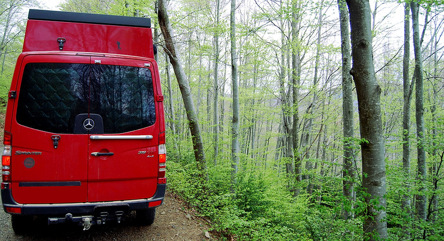 cruzando bosque