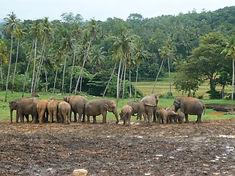 Australian Tour of Sri Lanka