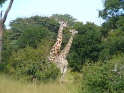 SouthAfrica-(9).jpg