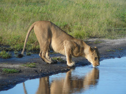 SouthAfrica-(13).jpg