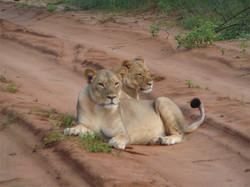 SouthAfrica-(5).jpg