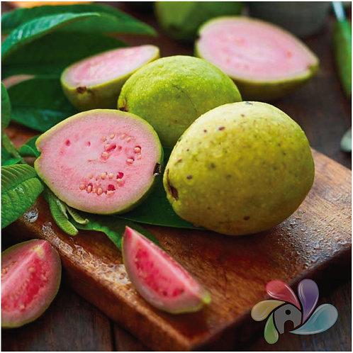 TFA - Guava