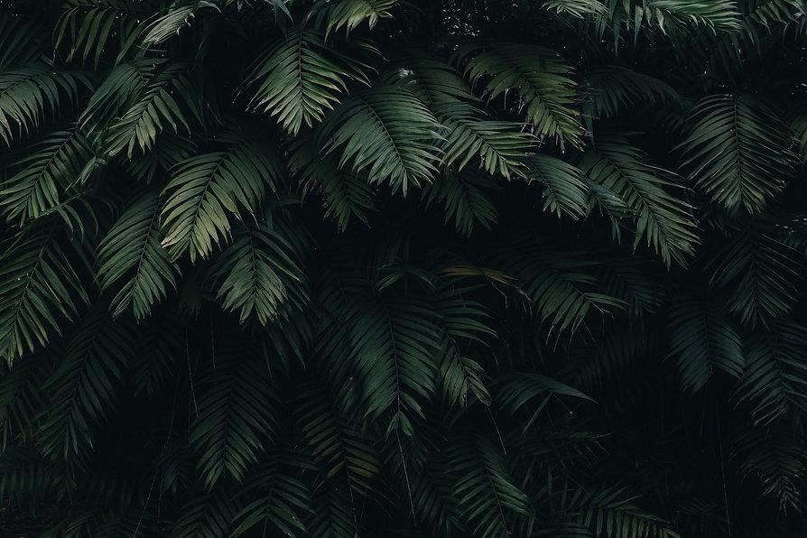 green-leaves-1072179.jpg