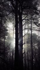 Between the Light