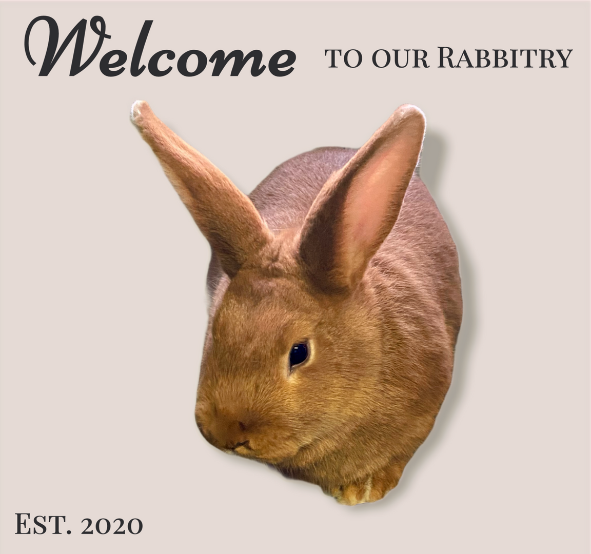 Welcome from Lucille