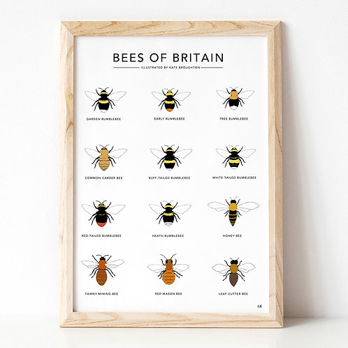 Bees Of Britain A3 Print