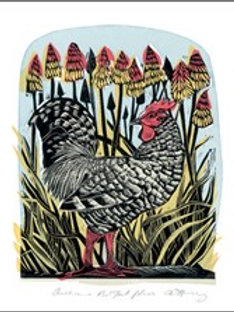 Chicken & Red Hot Pokers Card