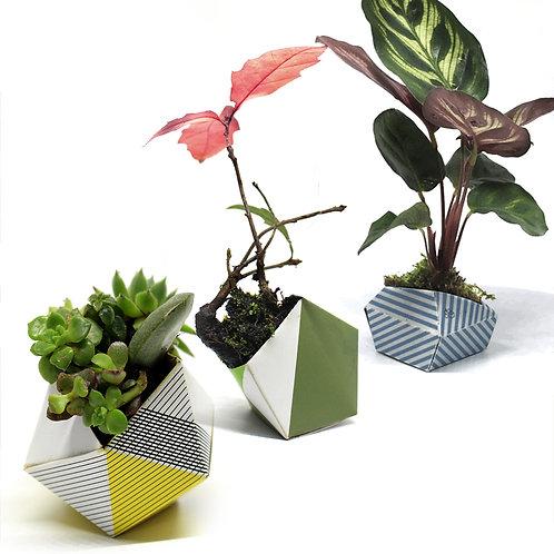 Origami Plant Pots