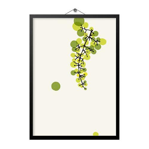 Grapes A4 Print