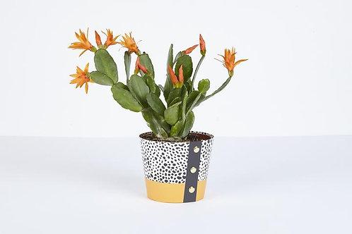 Spores Plant Pot Cover (Medium)