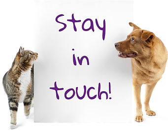 Stay In Touch - dog and cat.jpg