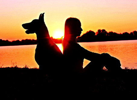 Natural Support for Pets with Epilepsy