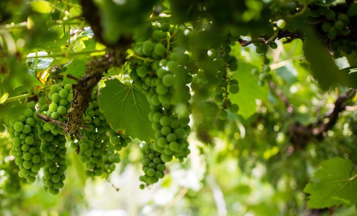 Les logis du plat d'étain-Vigne