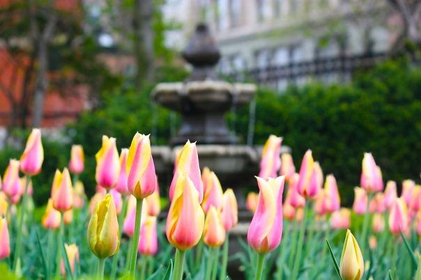 LindaCamardo_4-21pinks-fountain.jpg