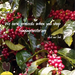 partner-haitian-coffee-cherries