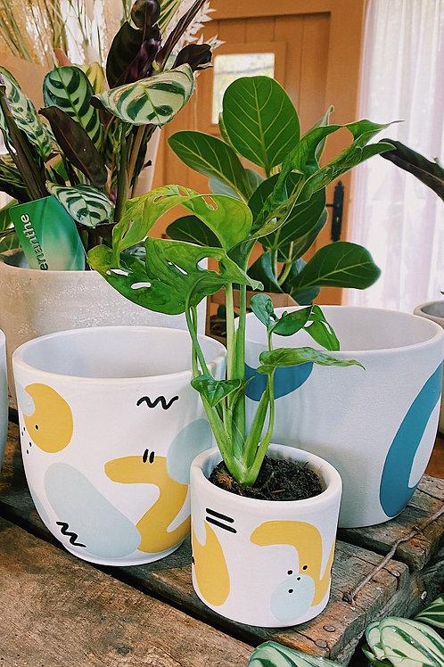 Mini Pot & Monstera Monkey Leaf Mini