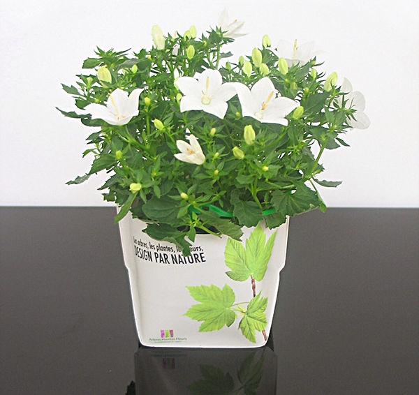 Tandm Design, agence de design spécialisée dans la conception de vases eco-concus
