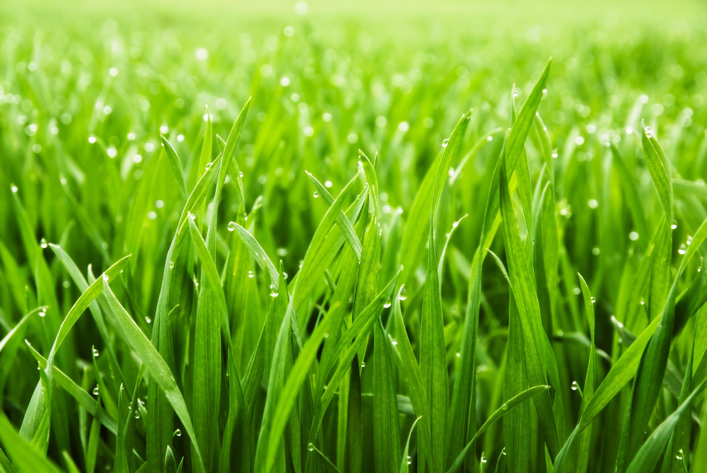 Gras Bild Fotolia