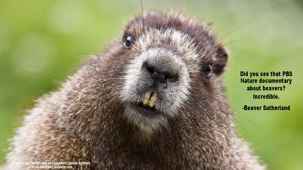 Beaver Sutherland.jpg