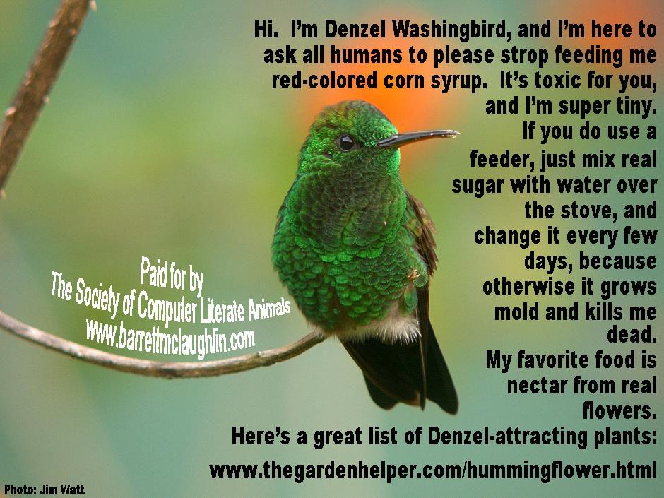 Denzel Washingbird.jpg