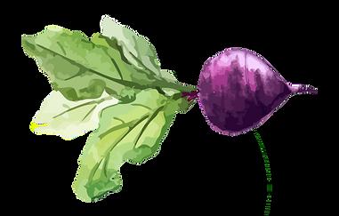 268-2689197_chard-turnip-watercolor-painting-vegetable-food-transparent-food.png