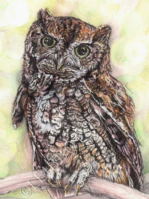 """5x7"""" Giclee Art Print- Little Owl"""