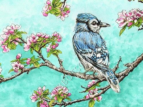 "5x7"" Giclee Art Print- Blue Jay"