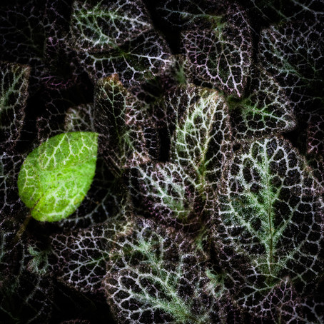 Abstract Botanical Photography