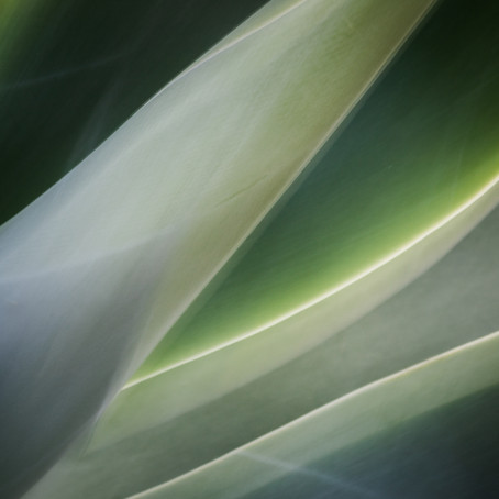 String Theory - Abstract Botanical Photography