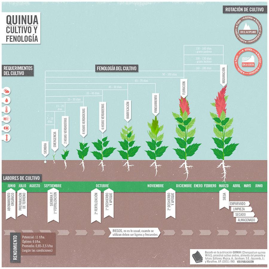 Requerimientos de cultivo y fenología de la Quinua