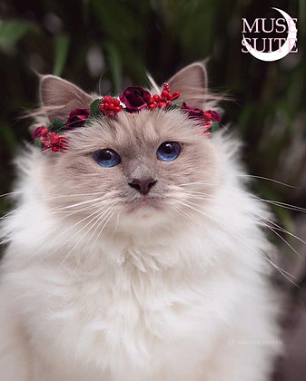 Cat crowns - diadem for cats - flower circlet for little pets - dark red and red