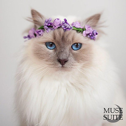 Purple Cat Crown - Diadem for cats (and littledogs).
